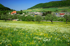 Village In The Alps. Dandelion fields with cherry trees,small village at background.Germany,Bavaria royalty free stock photo