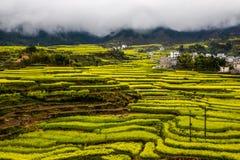 Village avec la fleur jaune de graine de colza dans le domaine en terrasse Photographie stock libre de droits