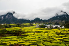 Village avec la fleur jaune de graine de colza dans le domaine en terrasse Photos libres de droits
