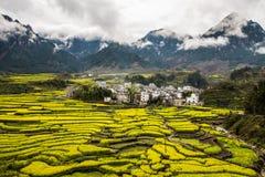 Village avec la fleur jaune de graine de colza dans le theMist Photo libre de droits