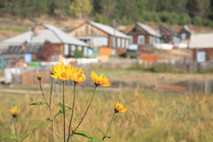Village on Baikal lake Royalty Free Stock Photo