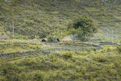 Village in Baliem Valley