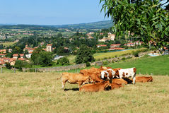 A village in Beaujolais, France Stock Photography