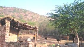 Village beauty. Indian village beauty or nature beauty Stock Image