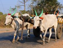 Village Bullock cart stock photo