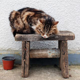 Village cat. Rustic cat sitting on a bench Stock Photography
