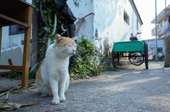 Village cat in Hong Kong Royalty Free Stock Images