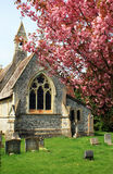 Village Church Yard. An idyllic Village Church Yard with the arched window of the church and bell tower visible. Pink Spring blossom on a tree to foreground with Royalty Free Stock Image