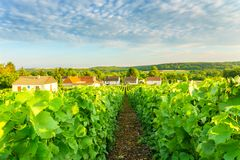 Village countryside and champagne vineyards at montagne de reims. France royalty free stock photos