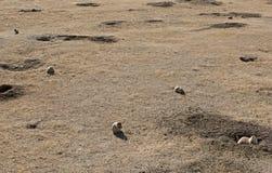Village de crabot de prairie Photographie stock libre de droits