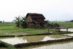 Village de Terai au Népal Photographie stock
