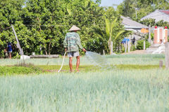 Village de Tra Que, province de Quang Nam, Vietnam Images libres de droits