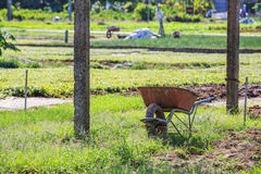 Village de Tra Que, province de Quang Nam, Vietnam Photo stock