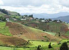 Village de tribu de colline et champ végétal en terrasse Photos stock