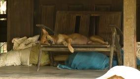 A village dog asleep on a wooden seat, Myanmar
