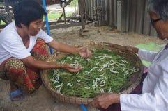 Village en soie de Tasawan dans Surin Photos stock