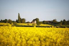 Village with rapeseed field. Village in England surrounded by fields of yellow rapeseed flower. Shallow depth of field with focus on house royalty free stock photos