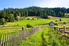 Village farm nearby forest at sunny day Stock Images