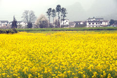 Village and flower plantation scenery in Wanfenglin,Guizhou in C Stock Photo