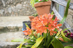 Village, flowerpots street in the tourist island of Mallorca, Va. Ldemosa city in Spain Royalty Free Stock Photo