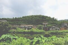 Village by a Forest with Green Plants Royalty Free Stock Photos