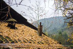 A Village With Full of Fallen Leaves Stock Photography
