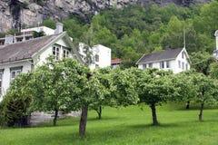 Village Geiranger, Geiranger fjord, Norway. Stock Photo