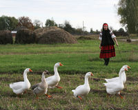 Village girl with geese stock photo