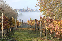 Village and Grapevines royalty free stock photo