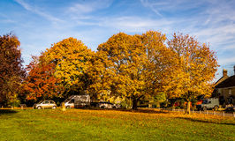 Village Green in Autumn. The village green in the small village of Stoford, Somerset, UK in the Autumn. These beautiful Sycamore Trees (Acer Pseudoplatanus Stock Photos