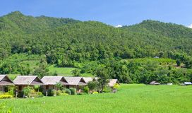 Village with green field. In Pai Maehongson ,Thailand royalty free stock photo