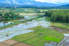 Village hill. Rice field in rural village hill Thailand Stock Photos