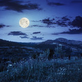 Village on hillside meadow with forest in mountain at night Stock Photo