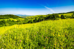 Village on hillside meadow Stock Image