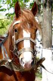 Village horse. Photograph of rural horse by the closeup Stock Photo