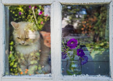Village house and a red cat waiting for owner Royalty Free Stock Photo
