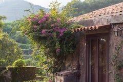 Village house garden Stock Photos