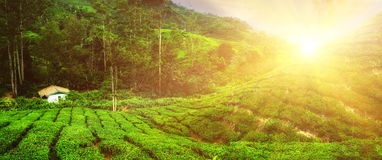 Village house at tea plantation under sunset sky. Malaysia Stock Images