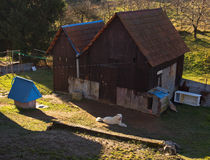 Village House with White Dog Royalty Free Stock Photos