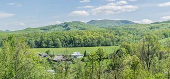 Village houses in a field of dandelions by the forest. Village houses in a field of blooming dandelions by the forest in the background of the Carpathian royalty free stock image