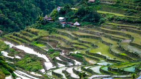Village houses near rice terraces fields. Banaue, Philippines. Village houses near rice terraces fields. Amazing abstract texture with sky colorful reflection in Stock Photography