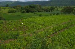 Village indien vert et prospère Photos stock