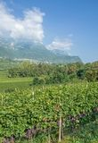 Village of Kaltern,south Tyrolean Wine Route,Italy. Village of Kaltern near Merano,South Tyrolean Wine Route,Trentino,Alto Adige,Italy royalty free stock photo