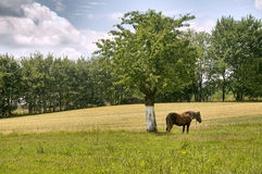Free Village Landscape Royalty Free Stock Image - 20341516
