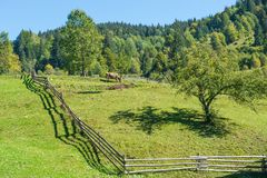 Village landscape with fence. Village landscape with cow on green hills Royalty Free Stock Photos