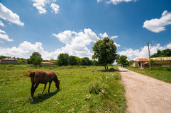 Village landscape with a horse grazing grass Stock Photo