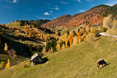 Village landscape in Romania royalty free stock photography