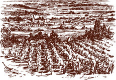 Village landscape with vineyards Stock Images