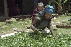 Village life Ethiopian mother with child dries herbs. Ethiopia, Oromia, village CHANCHO Gaba Robi: Oromo, largest ethnic population group in Ethiopia, woman sits Royalty Free Stock Images