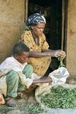Village life Ethiopian mother and son clean herbs. Ethiopia, Oromia, village CHANCHO Gaba Robi: Oromo, largest ethnic population group in Ethiopia, woman sits Royalty Free Stock Photography